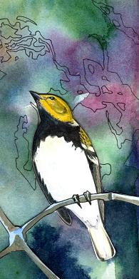 bird001copy