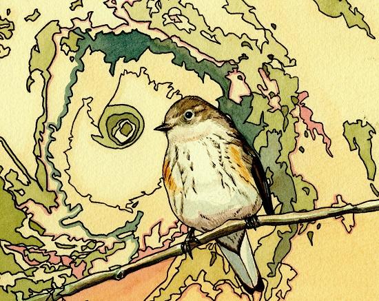 bird011copy